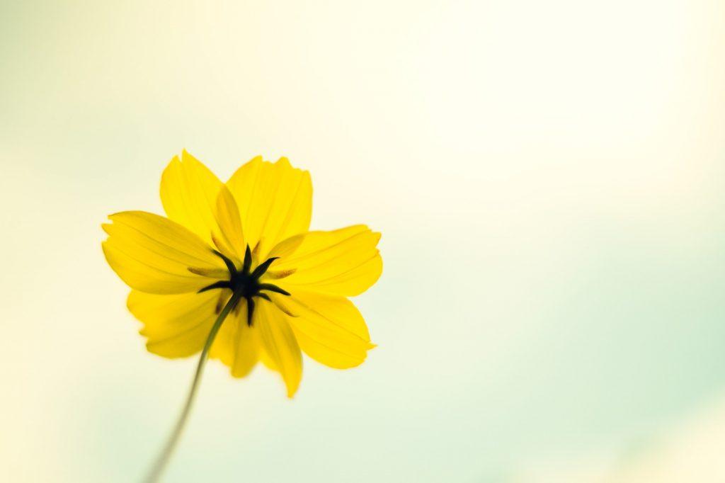ひとりぼっちで咲く花