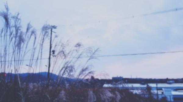安全地帯「風」おすすめ動画の背景